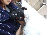 とりあえずお約束。雪を食べてみるコトラ