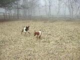 霧中の2ピン