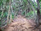 こんな山道を通ります