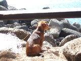 ランチを食べるために上陸したビーチにいた犬