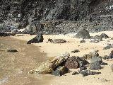 ビーチでお昼寝していた亀
