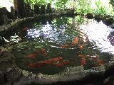 やすおじさんちには、鯉の池まであります!